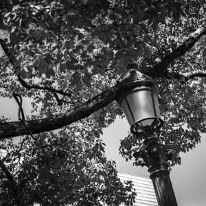 新しい公園を見下ろす木と街燈