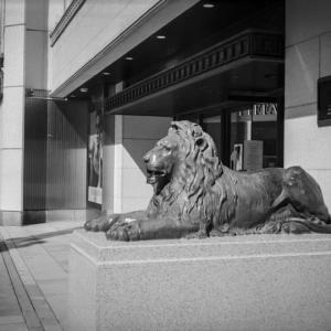 カンガルーに入れ替わったライオン