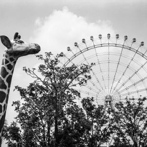観覧車並みにでかい巨大キリン