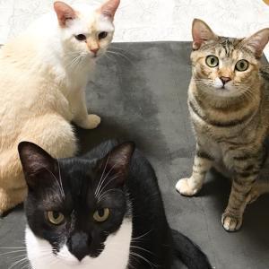 猫たちの近況と留守番のお手伝い話