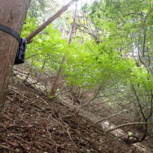 トレイルカメラで猟場の鹿をデバガメってみた