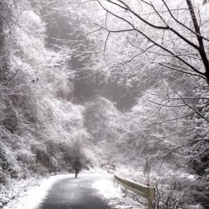 しんしんと雪ふる鹿猟