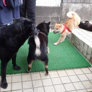 犬友が殴り込みに来た!!