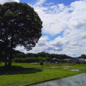 多摩サイの初夏の空が青すぎた!