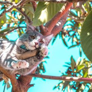 英国からの新情報:猫ちゃんに最適な食事とは?