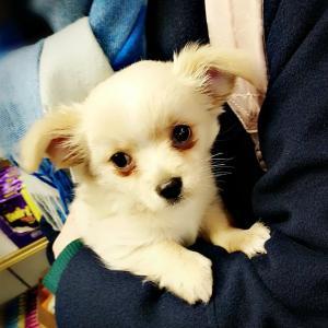 イギリス:ペットショップでの子犬子猫の販売が禁止に!