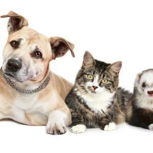ペットの新型コロナも増えている:世界の事例と家庭でできるケア・予防について
