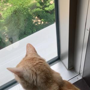 片づけと猫との生活