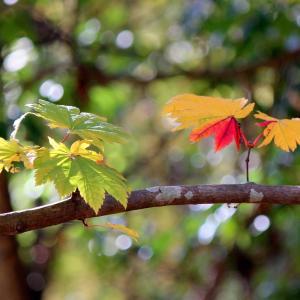 秋の写真教室