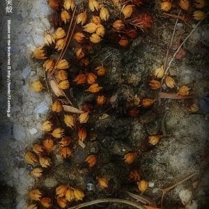サルスベリの実殻