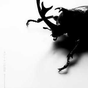 カブトムシの羽化 その3