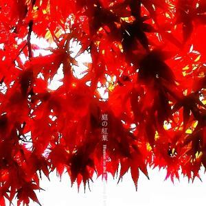 庭の紅葉 その6