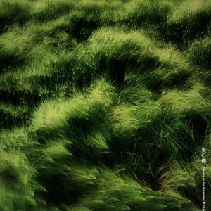 麦の穂 2021 その4