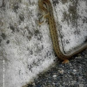 庭のヘビ君