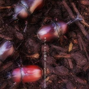 カブトムシの羽化