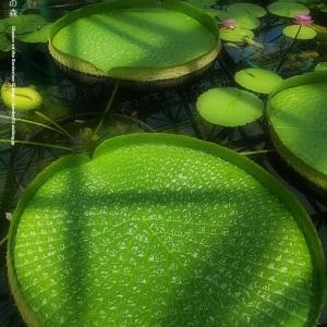 水生植物公園みずの森 その3