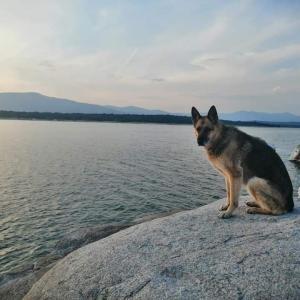 黄昏に愛犬とマドリッド郊外の貯水池でピクニック