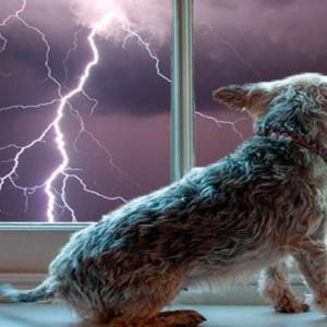 マドリッド州で大雨被害・友達の愛犬物語