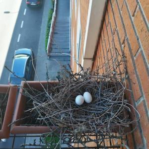 ベランダにお客さんーInvitados en la terraza