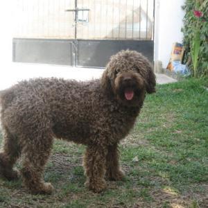 犬の訓練競技会ーConcurso de perros
