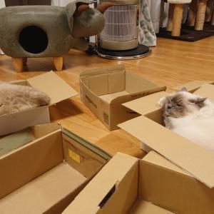 箱が好きなんだなあ にゃすを