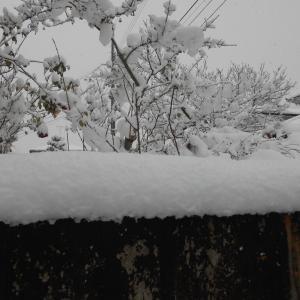 12月16日のの積雪・・・