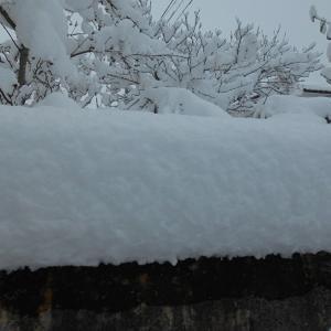 12月17日朝の積雪・・・