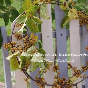 【秋のナチュラルインテリア】散歩道には素敵なものが溢れてる♪秋のインテリアを彩ります!