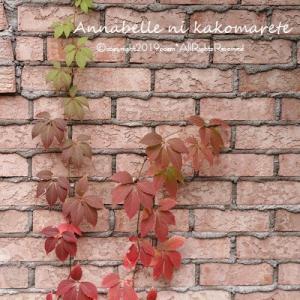 【秋のガーデン】寂しくなる時期の庭にうってつけの花!
