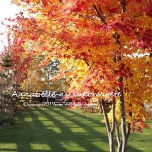 【紅葉の庭】「ありがとう」の反対は?プライスレスなおうちごはん♪