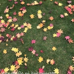 【秋の庭】毎日の作業の価値ありだった素敵な光景♪ガーデニングも終盤です!