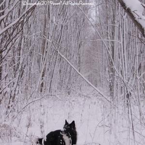 【雪】白い休日&森の中は凄かった!