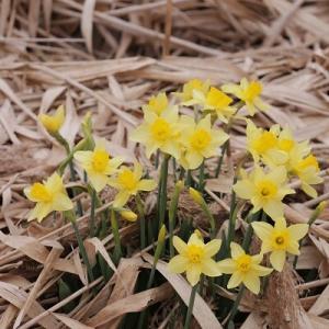 【今日の花】花のお礼はごみ拾い♪