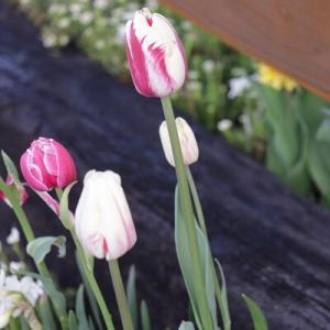 【メンテナンス】背景が美しいと花も映える♪