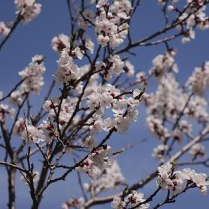 【実のなる花】すぐそこまで来ている未来は楽しいと思いたい!