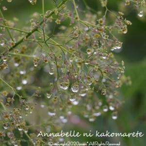 【ガーデニング】雨だからこそ楽しめるとっておきの小さな絶景♪
