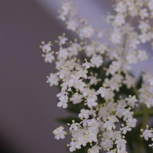 【ガーデニング】初夏の木に咲く白のリレー♪