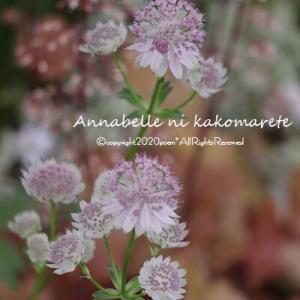 【ガーデニング】透明感のある花々で涼し気な雰囲気♪