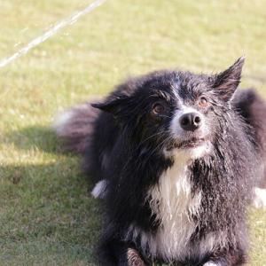 【マリメッコ】愛犬&バッグのお買い物マラソン♪