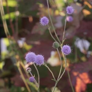 【ガーデニング】それぞれに可愛い秋の花♪