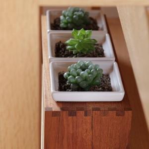 【インテリア】植物を植え替えて大人雰囲気に飾ってみる!&お買い物マラソンはウッディな大物を!