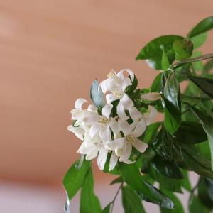 柔らかい陽ざしと華やかな香りの植物が作る春インテリア
