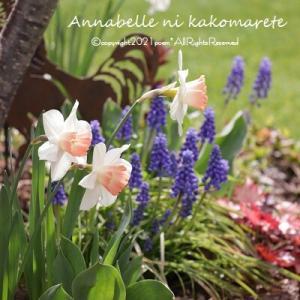 【ガーデニング】春らしい庭&お買い物マラソンで準備ポチ♪