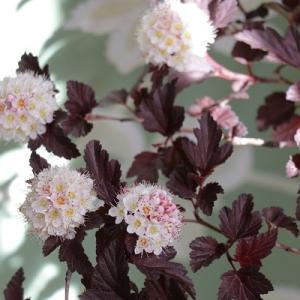 【ガーデニング】北欧のフラワーベースを飾るお花♪&マイ朝活