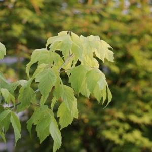 【雑木の庭】我が家の庭のテーマと新しく迎えた木