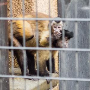 野毛山動物園 FILE:6 アリクイ・サル