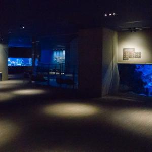 すみだ水族館 FILE:6 光と水のはぐくみ~サンゴ礁~ 浅瀬・群生