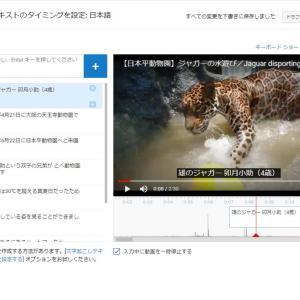 【日本平動物園】水遊びするジャガーの卯月小助【動画】