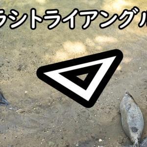 【みとしー】たたかうゴマフアザラシ【動画】