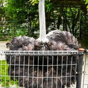 【日本平動物園】クランキーは ふしぎなおどりを おどった!【動画】